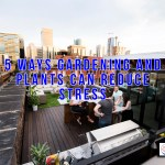 Reclaiming The Rooftop: Tips For Decks With A View