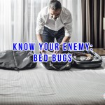 Know Your Enemy: Bed Bugs