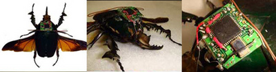 radio-controlled-beetle.jpg