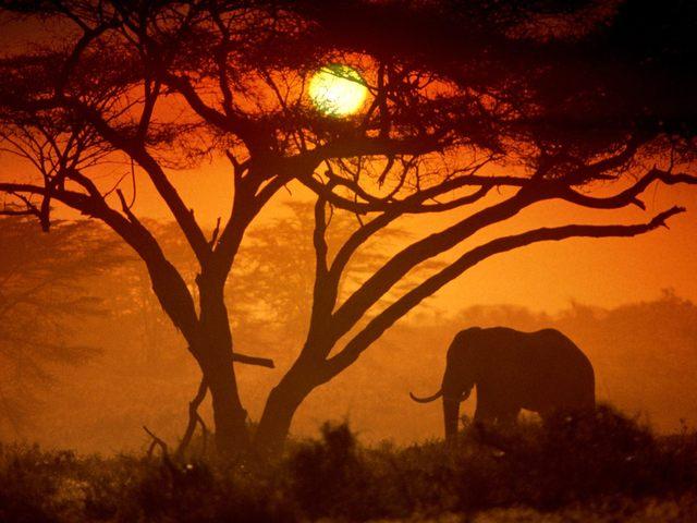 amboseli-national-park-kenya-picture.jpg