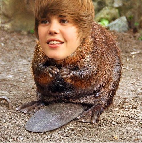 bieber-as-beaver2.JPG
