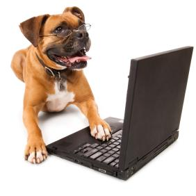dog-laptop.JPG