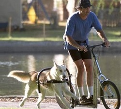 dog-powered-scooter.jpg