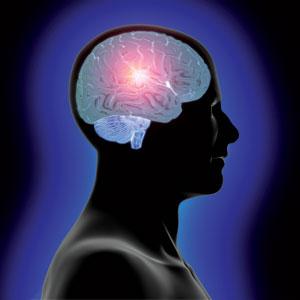 head_and_brain.jpg