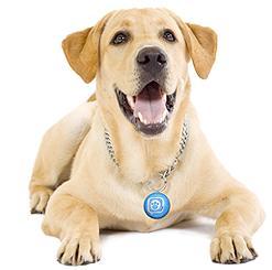 puppy tweets.jpg