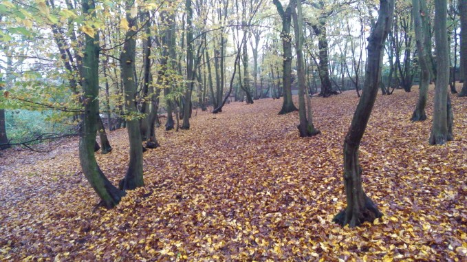 A walk in the woods with my ZenPad. Image quality is OK - not the best