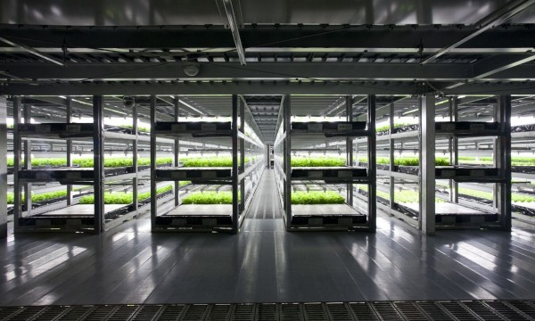 Vertical Farm: Tecnologia em cooperação com a agricultura