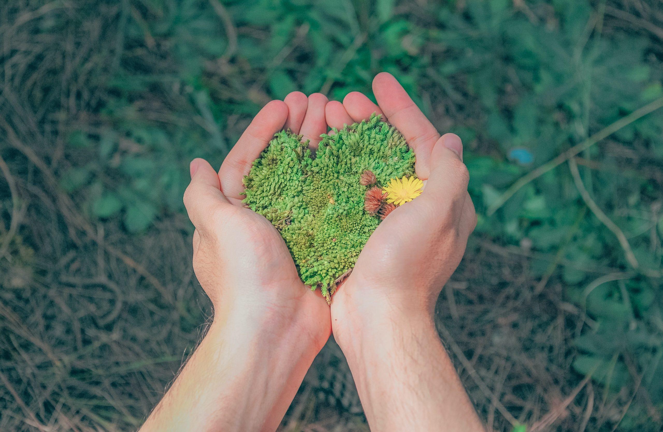 A importância da tecnologia no meio ambiente