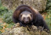 Climate-threatened animals unable to relocate