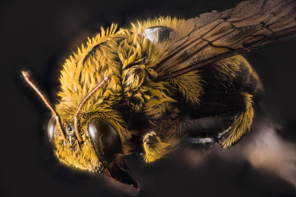Scientists discovered evidence of 27 new viruses in bees