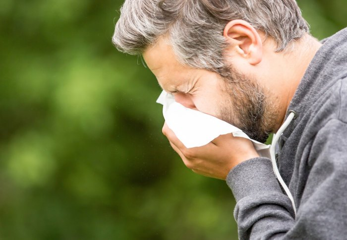 How protein fragments could help to tackle the cause of hay fever