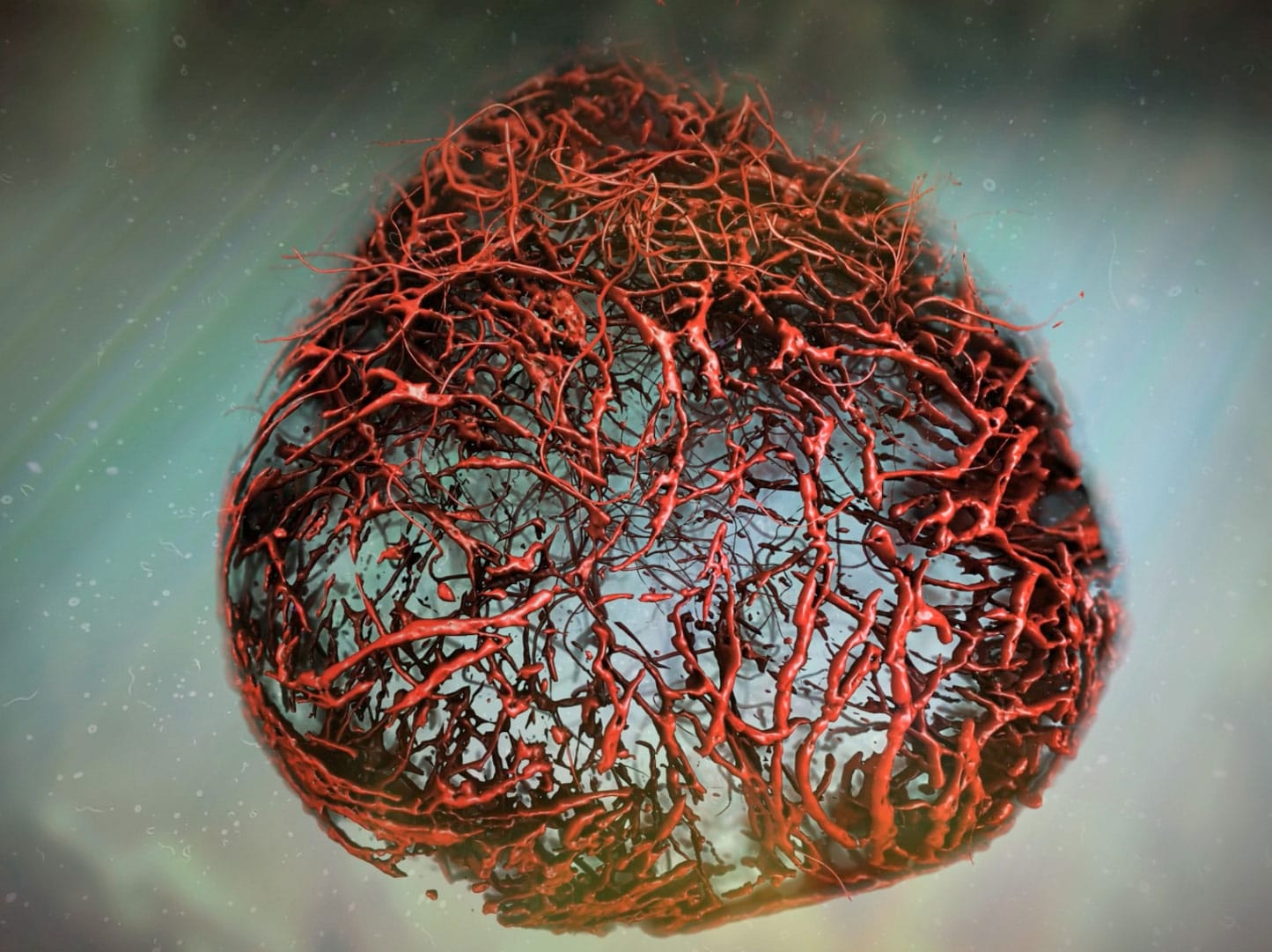 Scientists created perfect blood vessels in a Petri Dish for the First Time