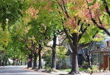 Seeing greenery in your neighborhood is associated with reduced cravings