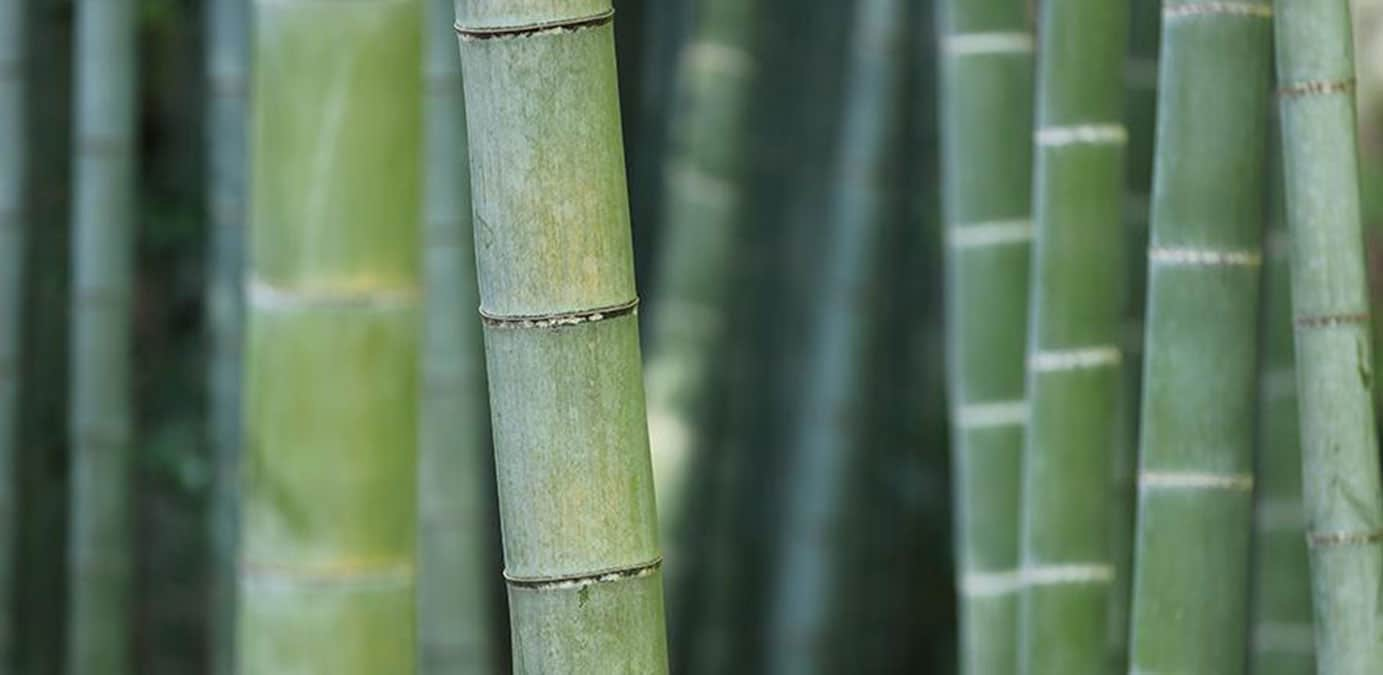 Visualizing heat flow in bamboo