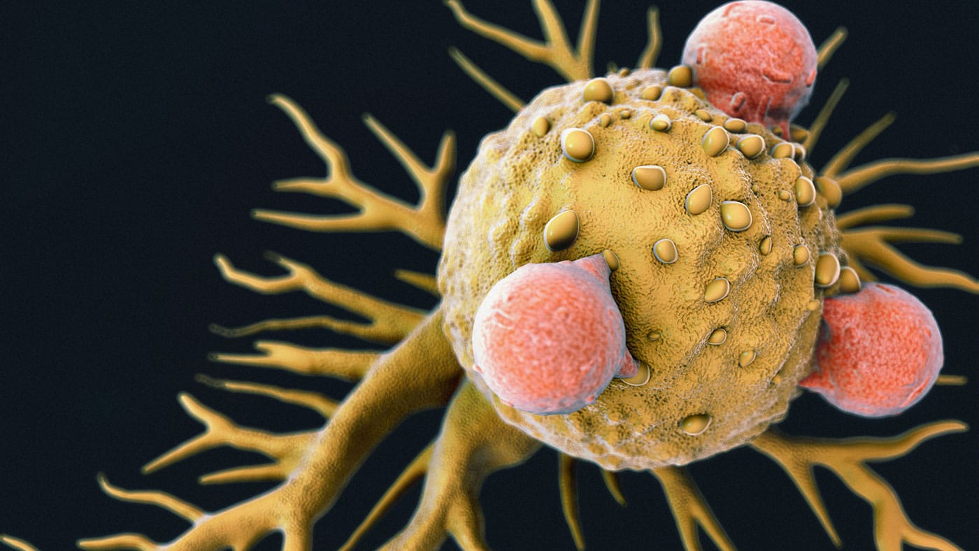 Discovery may treat all types of cancers