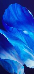Oppo Art+ Wallpaper (47) TechFoogle