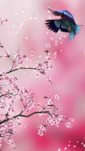 pink flower bird wallpaper