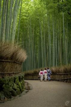 Bamboo tree raod phone backgrounds wallaper