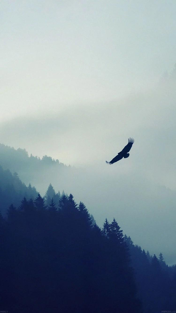 iPhone 7 flying bird wallpaper