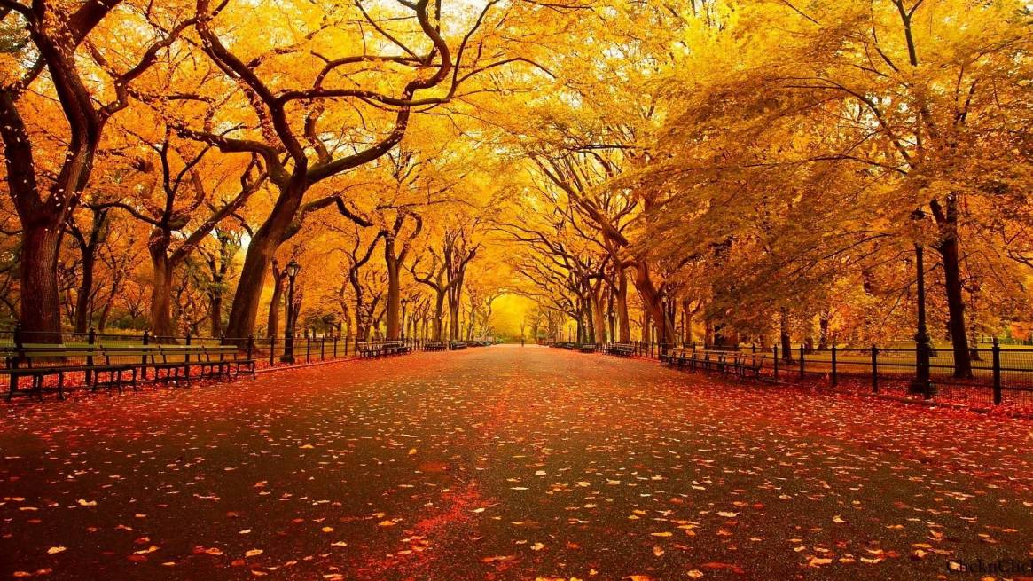 autumn-wallpapers-9