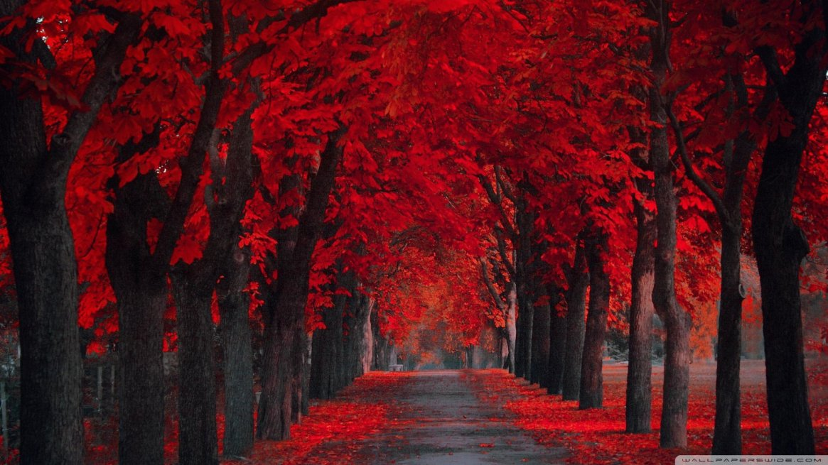 fall-wallpapers-full-red