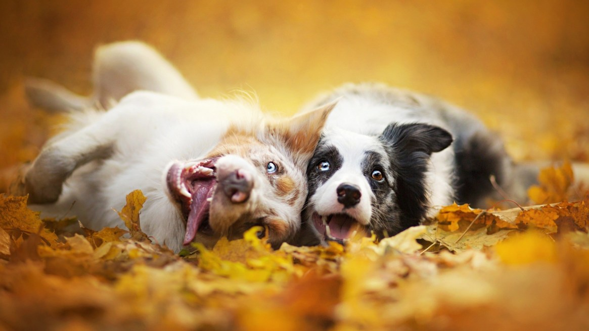 Fall-Wallpapers-of-dog-1