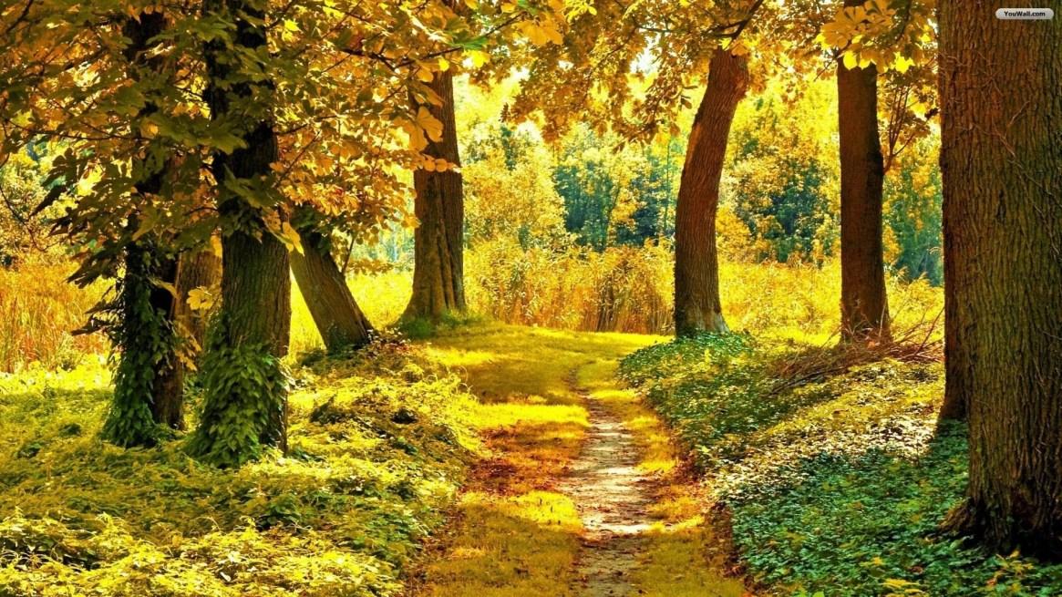 autumn-background-green