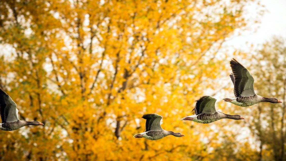 fall-background-yellow