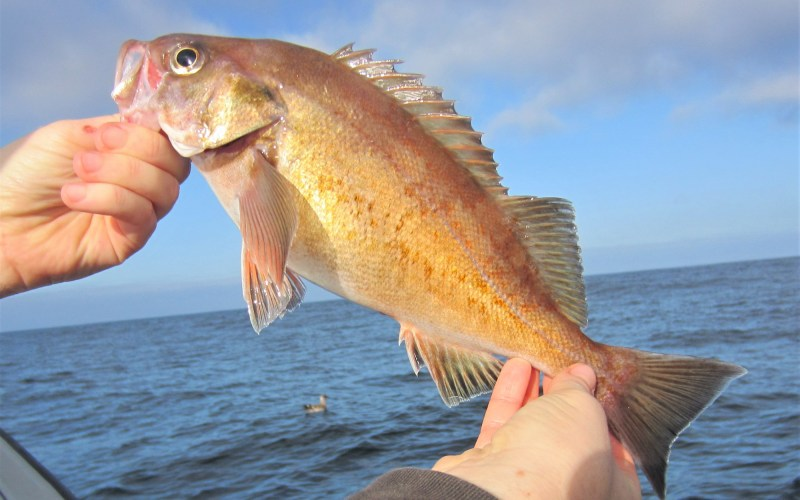 CDFW Recreational Fishing