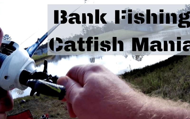 Bank Fishing Catfish Mania