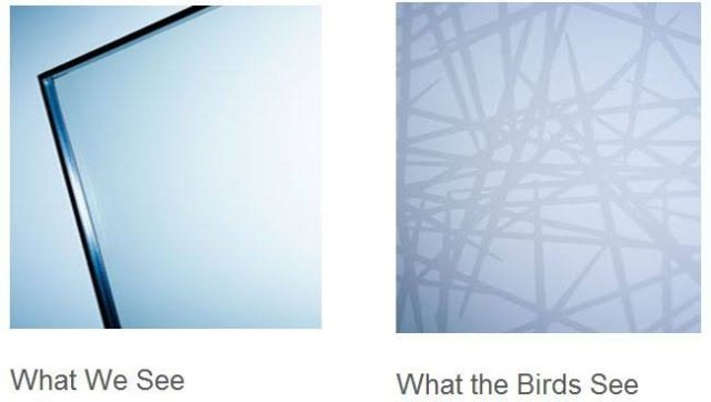 Protective Glass for birds