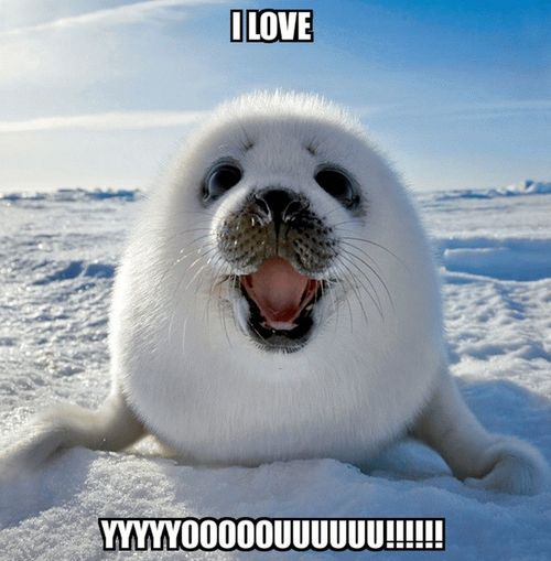 cute seal and a declaration of love