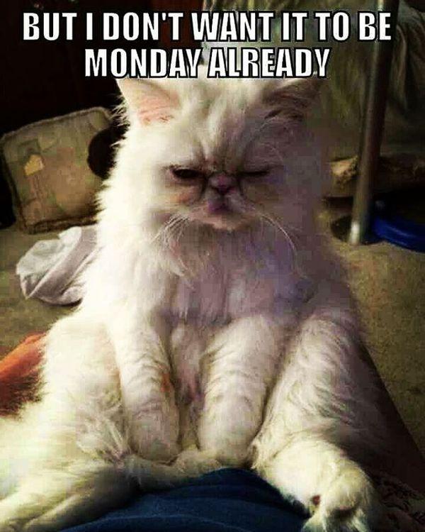 но я не хочу, чтобы это был уже понедельник