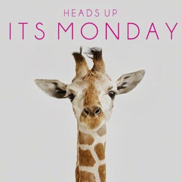 heads up its monday
