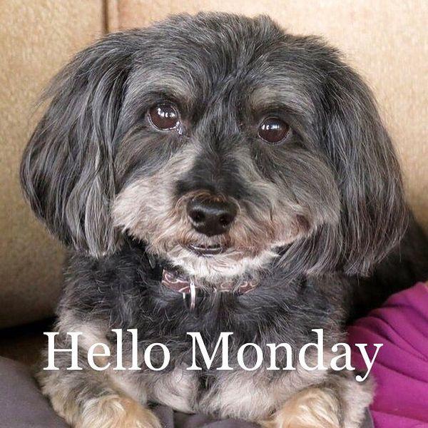 привет понедельник собака