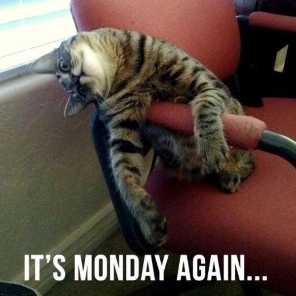 снова понедельник