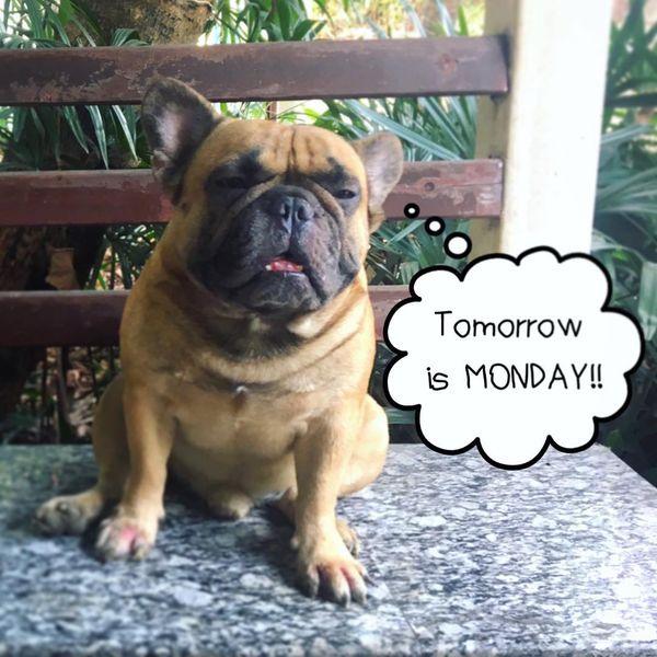 завтра понедельник собака