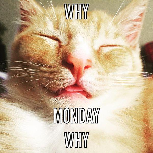 почему понедельник почему
