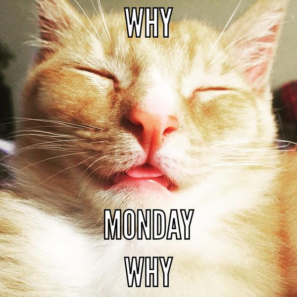 why monday why