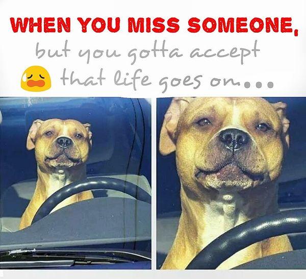 miss someone meme