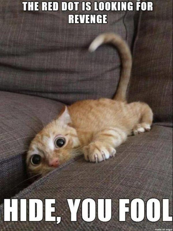 Pretty Cute Cat Memes