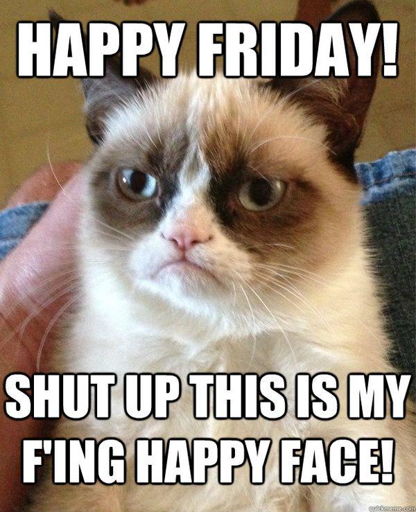 Terrific Funniest Friday Cat Meme