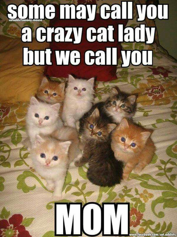 Excellent Child Kitty Memes