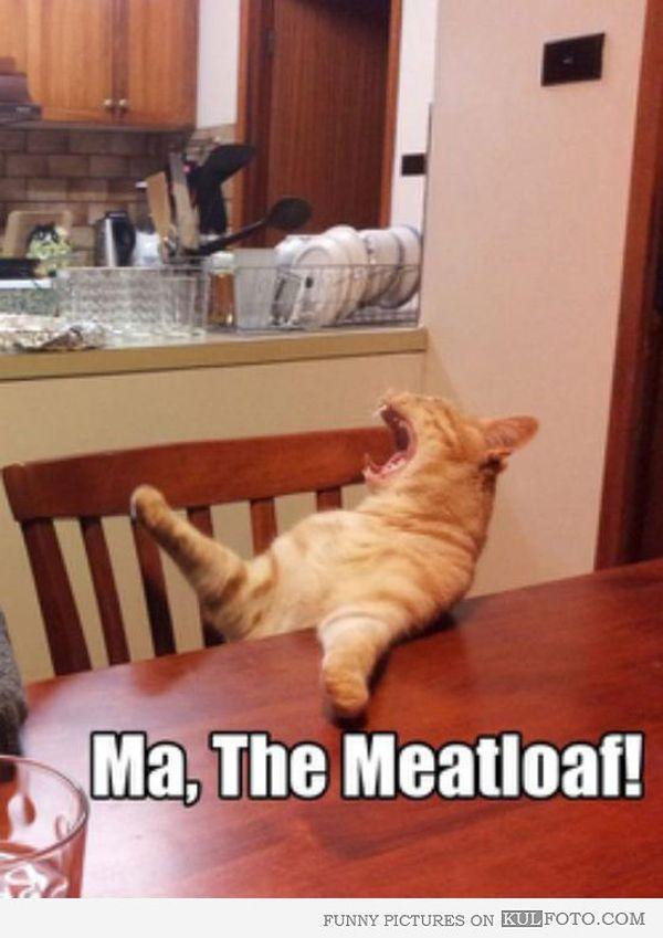 Romantic Cat Sitting at Table Meme
