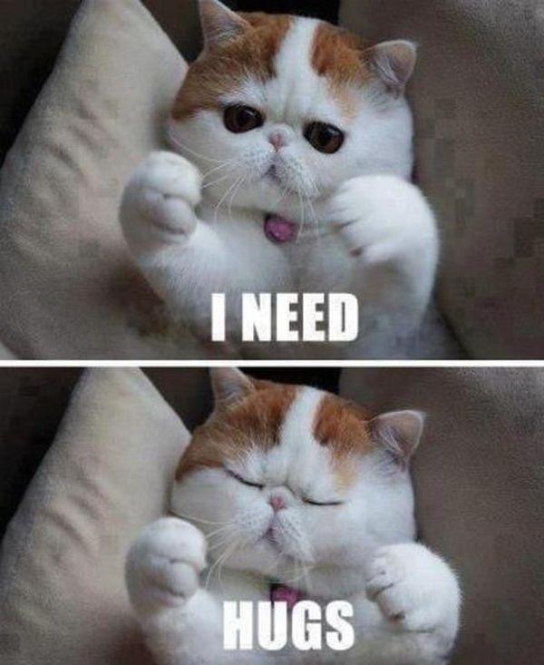 Magnificent cute hug meme