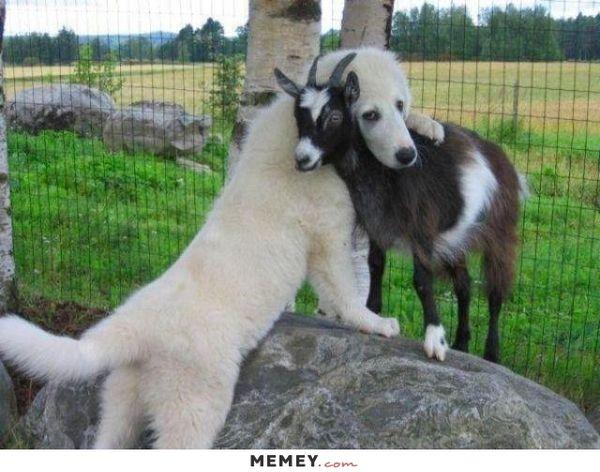 Popular cute hug meme