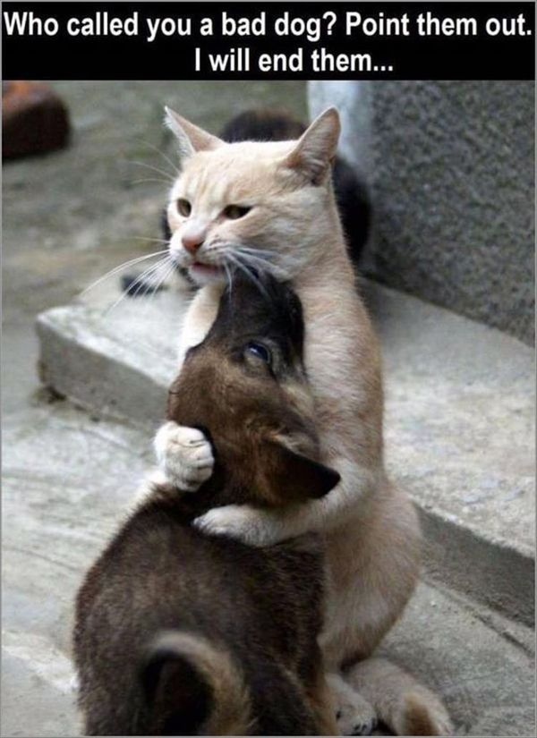 Nice funny pictures of hugs