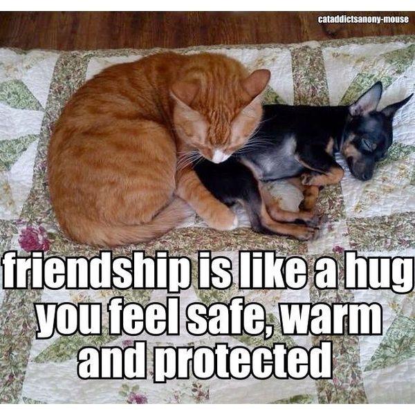 Cool funny hug pics