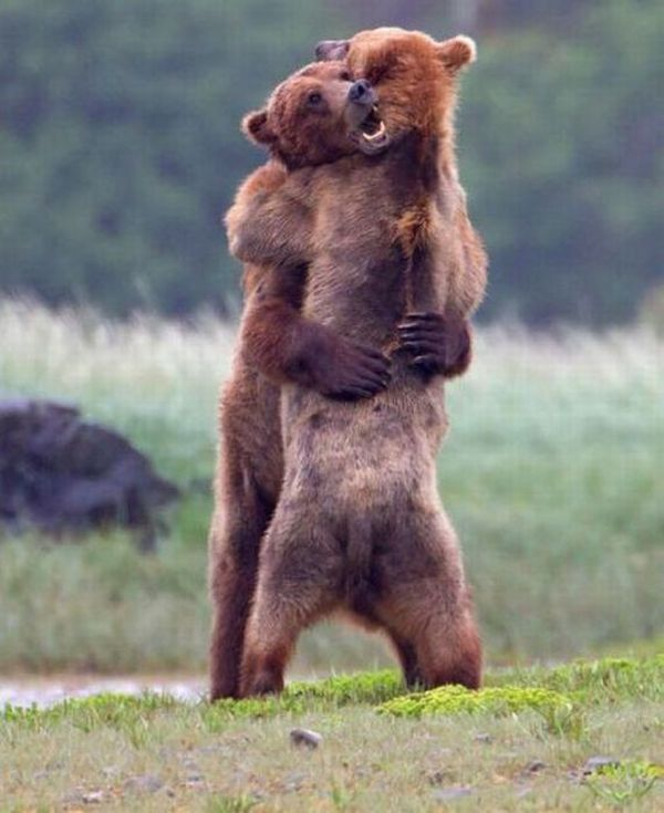Awesome funny hug pictures