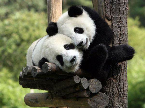 Beautiful funny hug photos